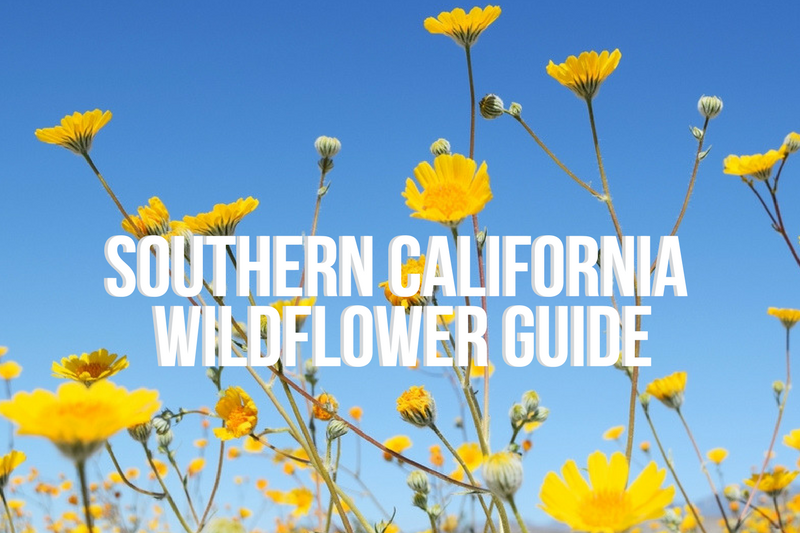Southern California Wildflower Guide