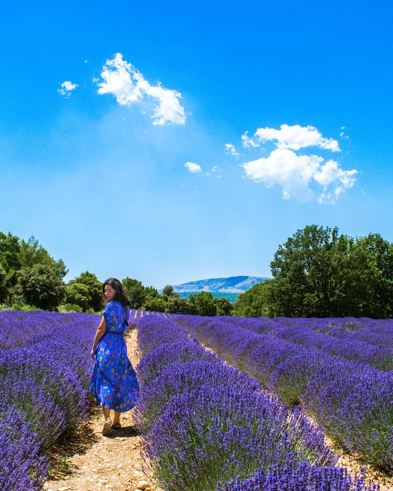woman in blue dress lavender field france