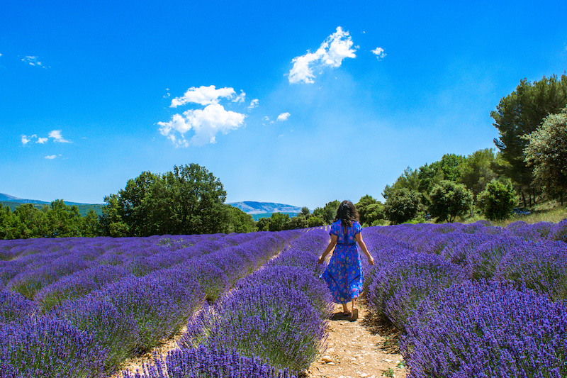 woman in blue dress lavender farm
