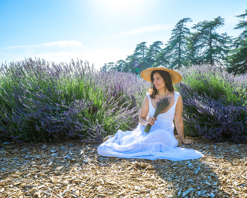 woman sitting Lavender Fields in Southern California
