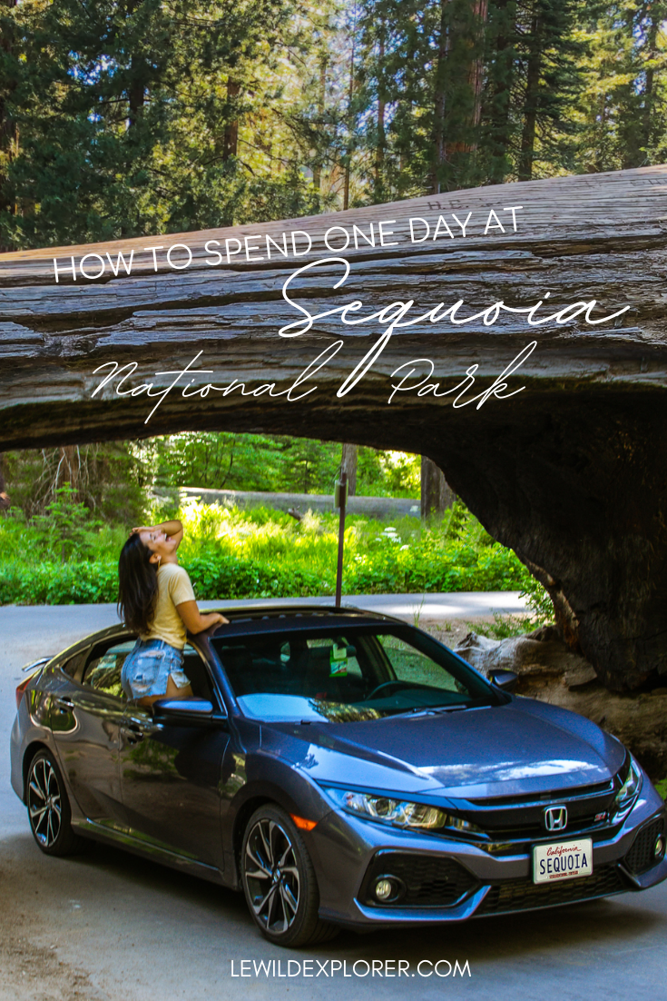 one day at sequoia national park