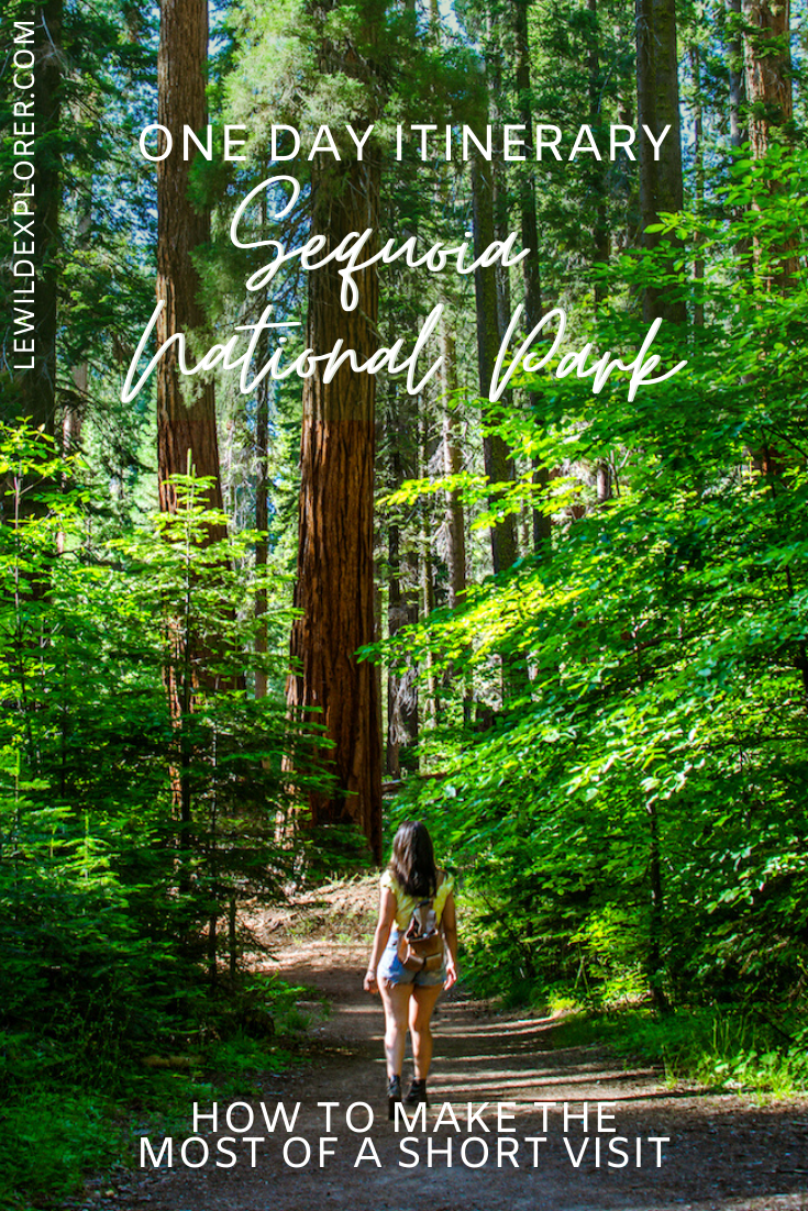 one day itinerary sequoia