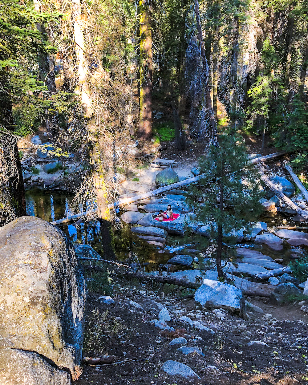 picnic at sequoia national park