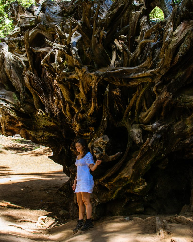 woman at petrified tree sequoia national park