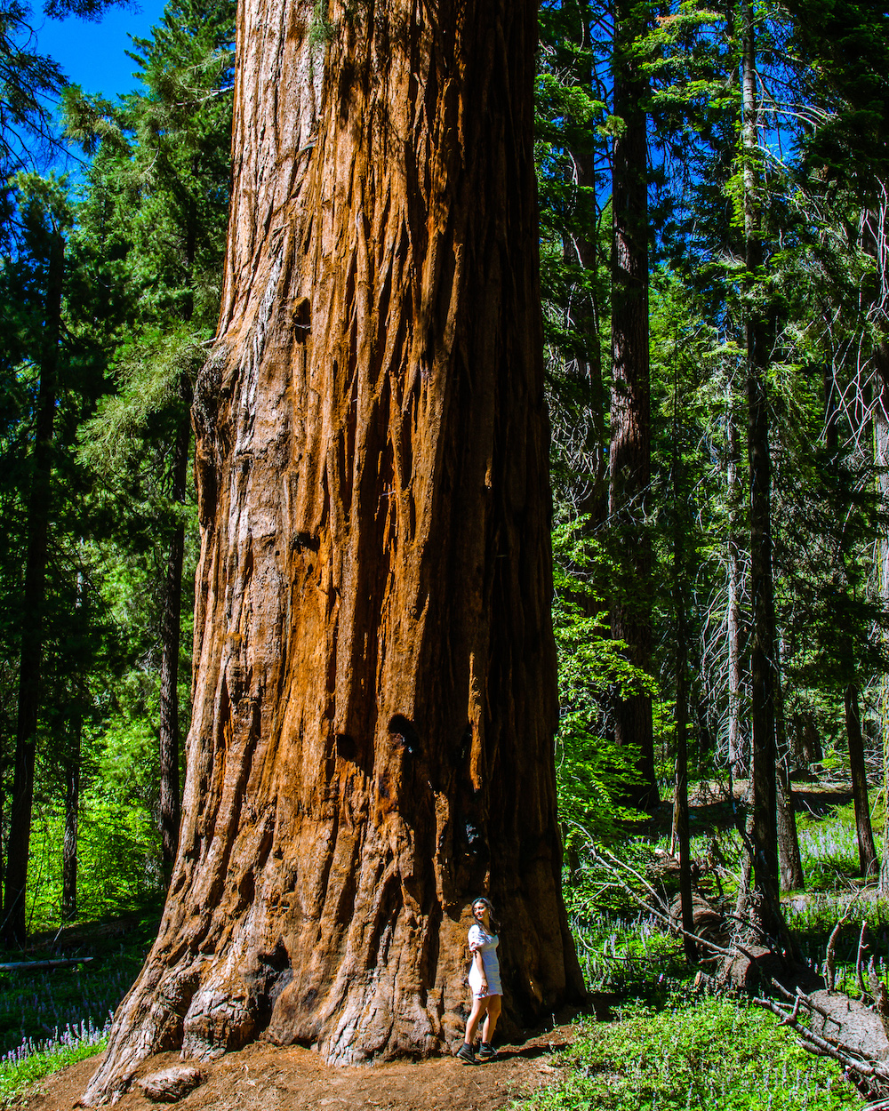 woman standing by sequoia tree