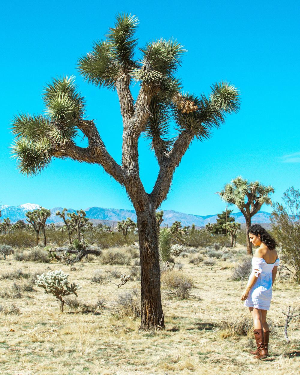 woman at joshua tree yucca plant