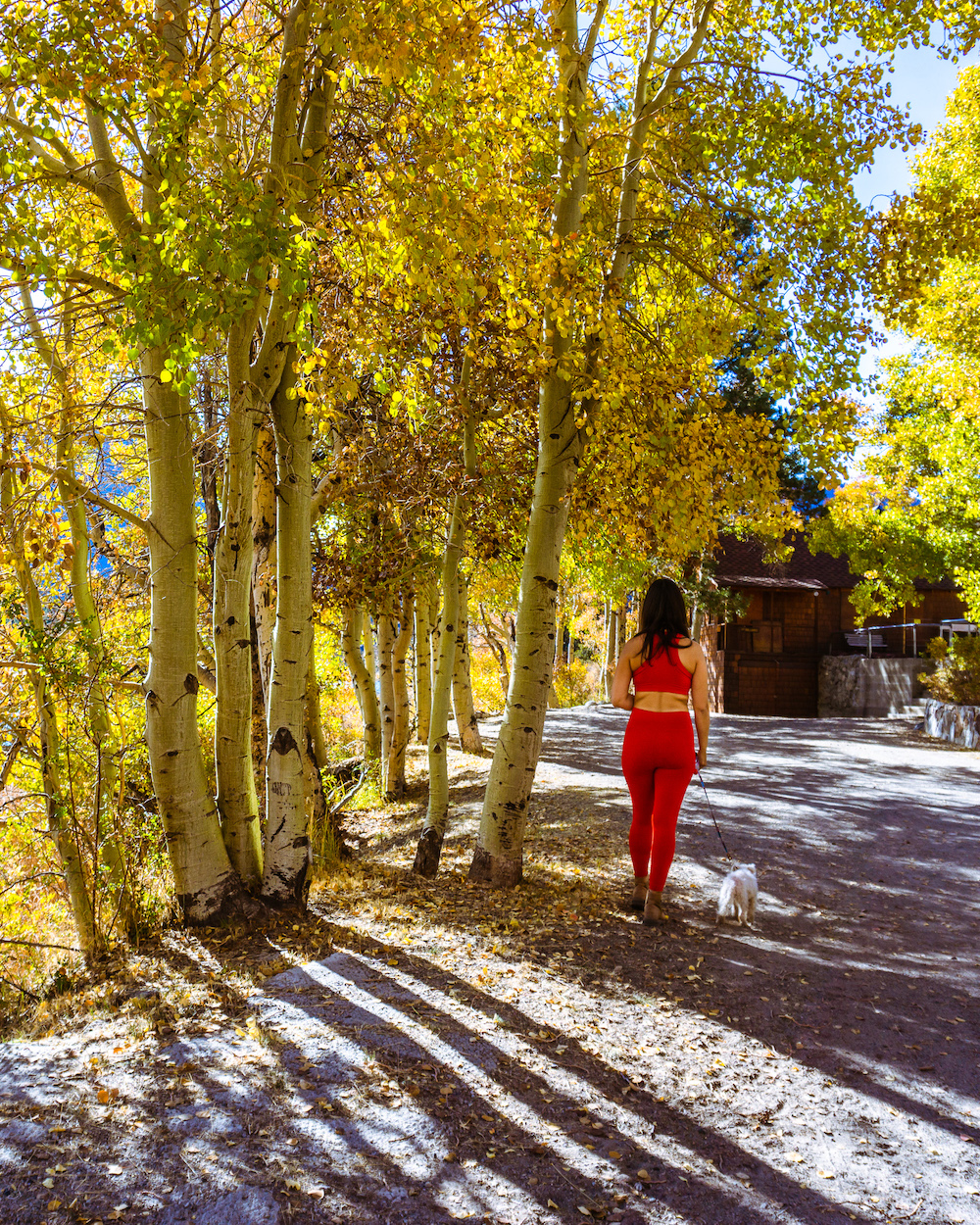 woman walking dog in small town with yellow aspen trees