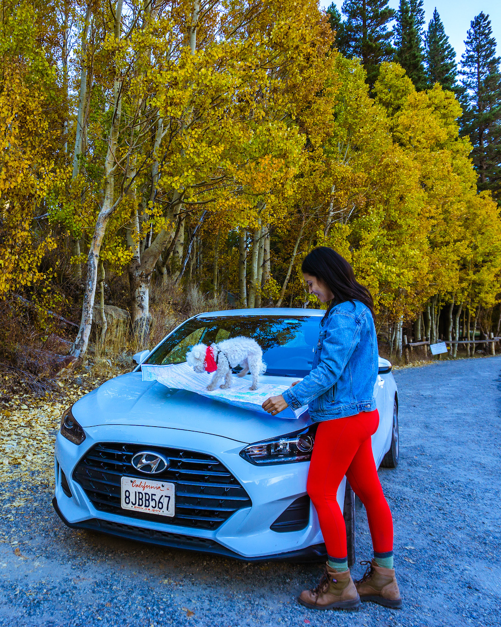 woman and dog looking at map on parked car
