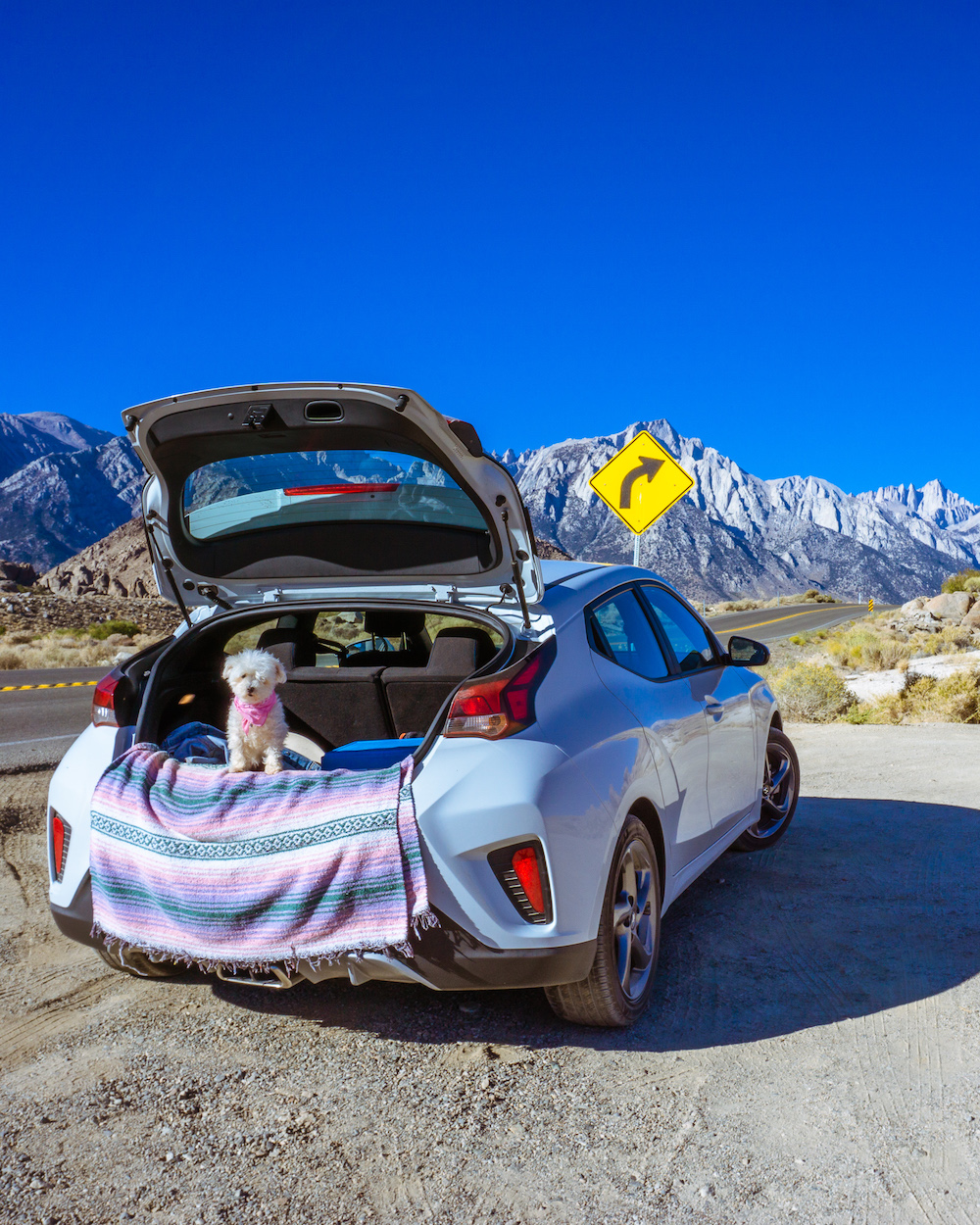 road tripping with your dog in car mountains