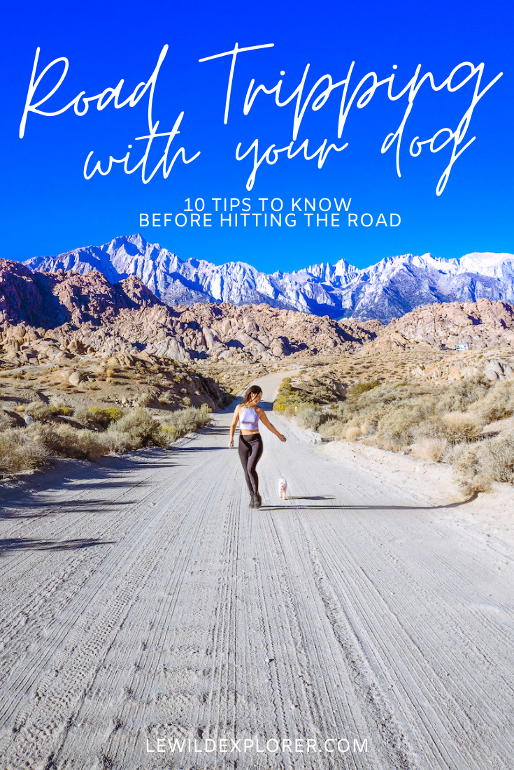 tips for road tripping with a dog