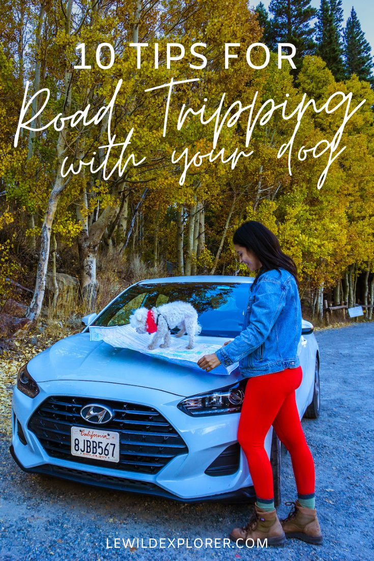 tips for road tripping with dog