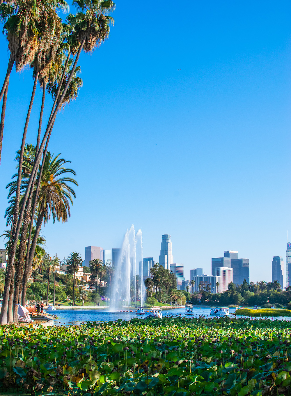 echo park lake la skyline view