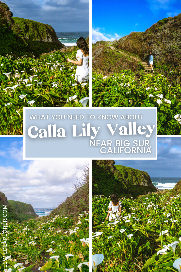 woman in white dress in calla lilly valley big sur