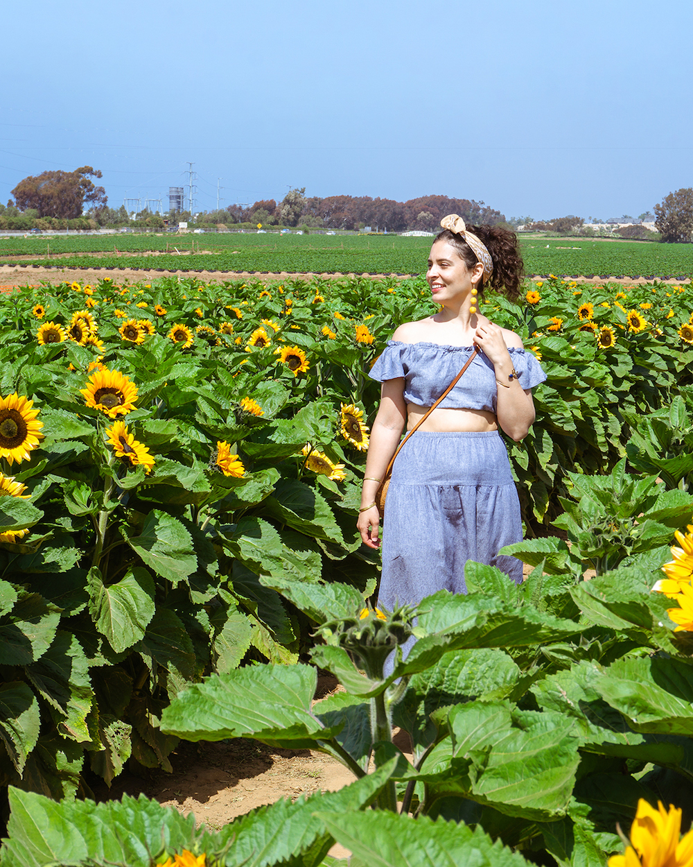 woman at strawberry company sunflower maze in carlsbad california