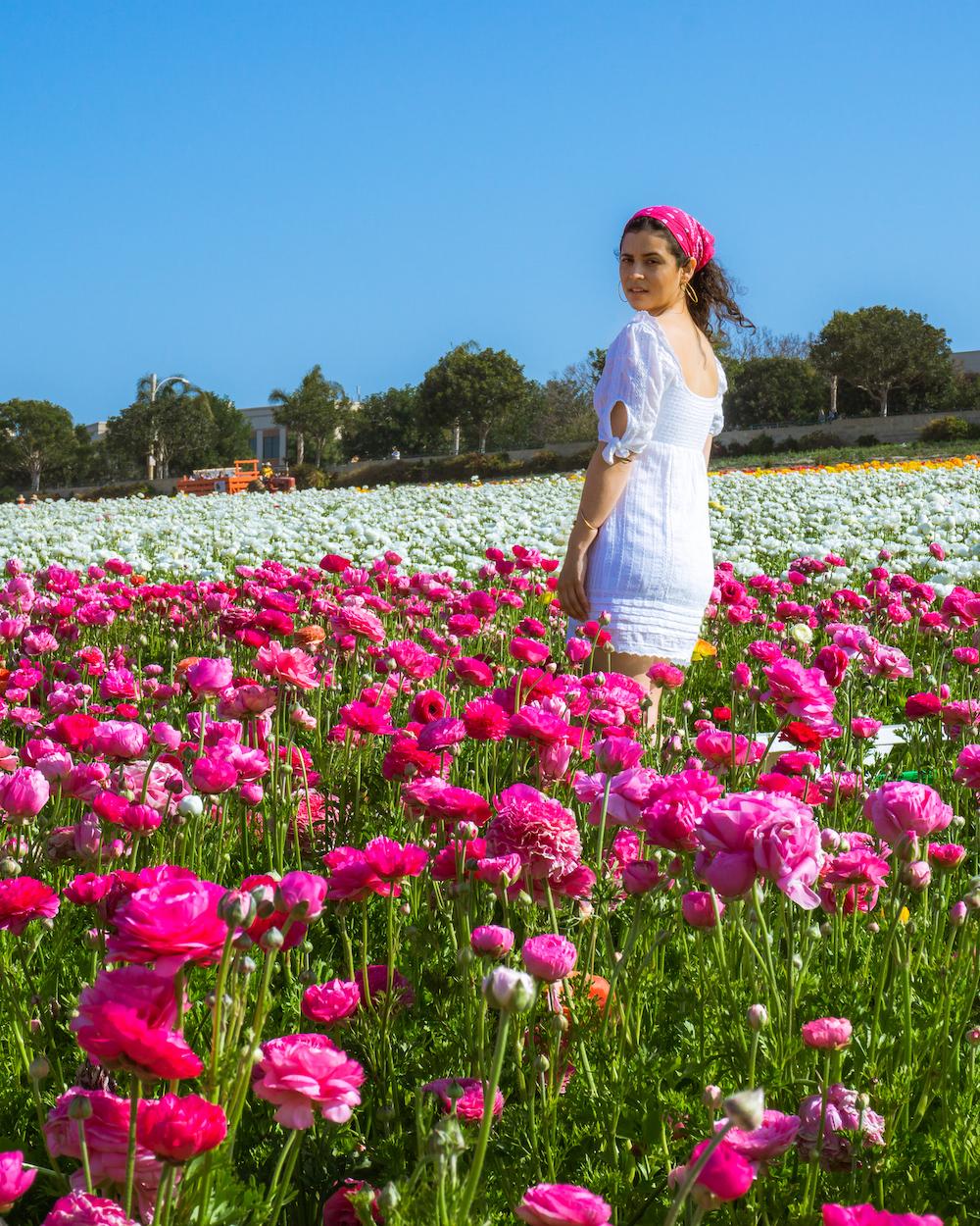 california the flower fields