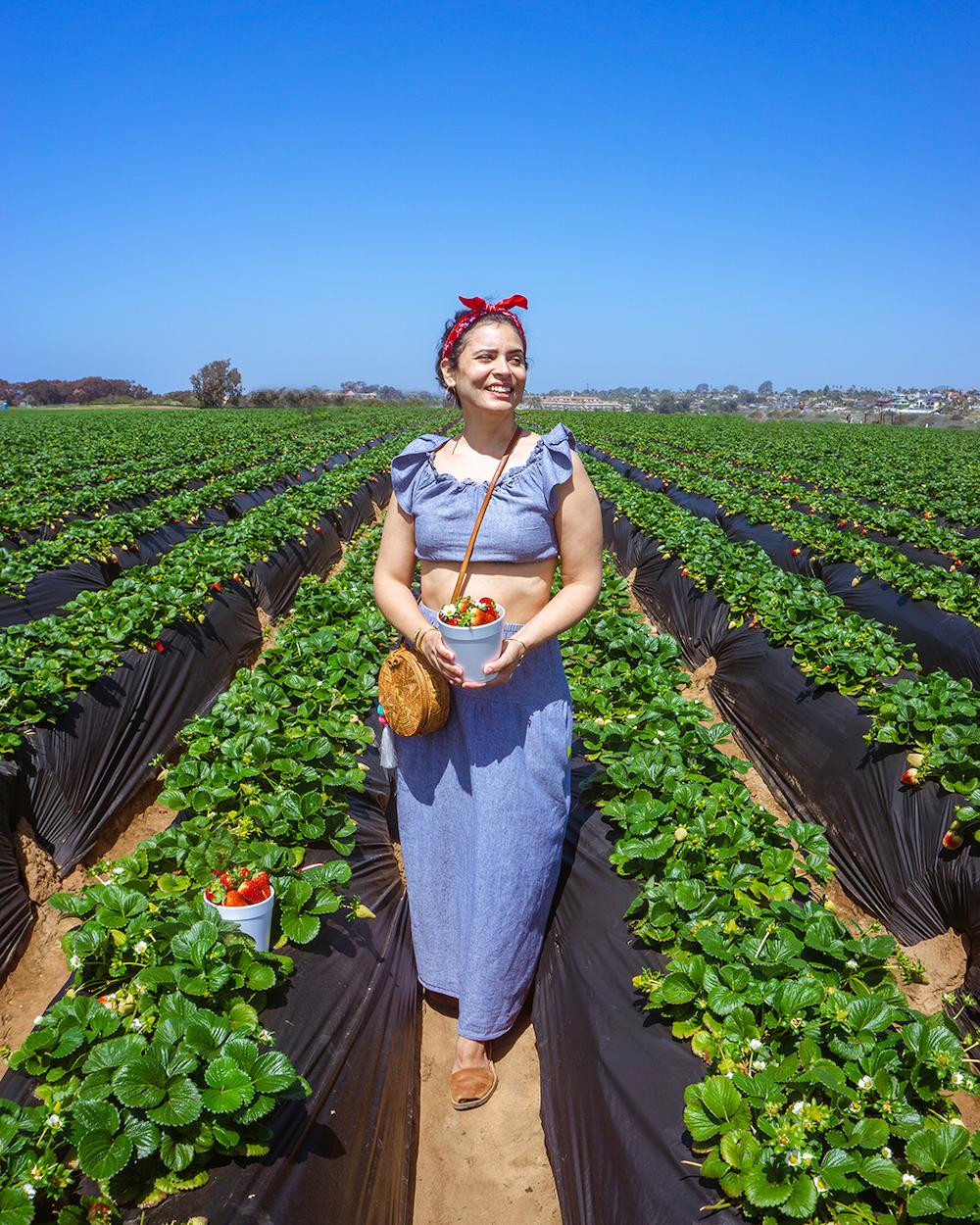 woman at carlsbad strawberry company u-picking