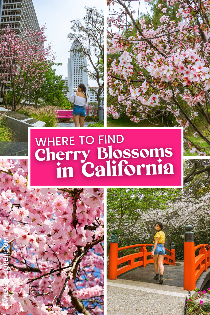 japanese garden with cherry blossoms in los angeles california