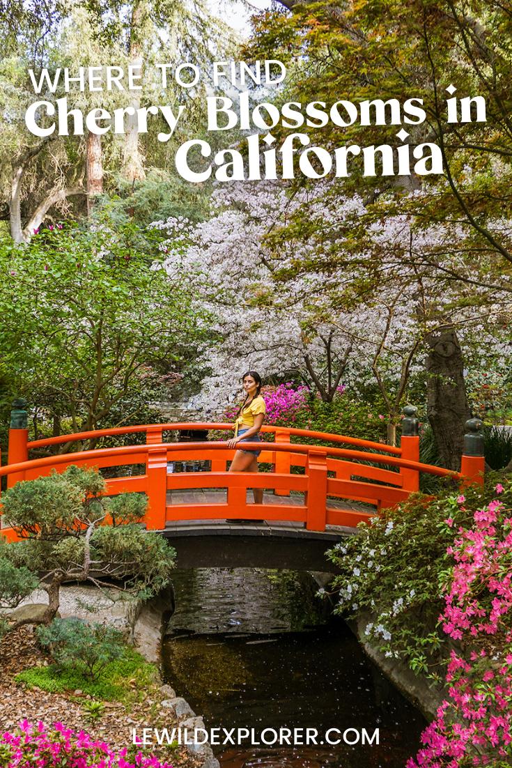 japanese garden with cherry blossoms in descanso gardens california