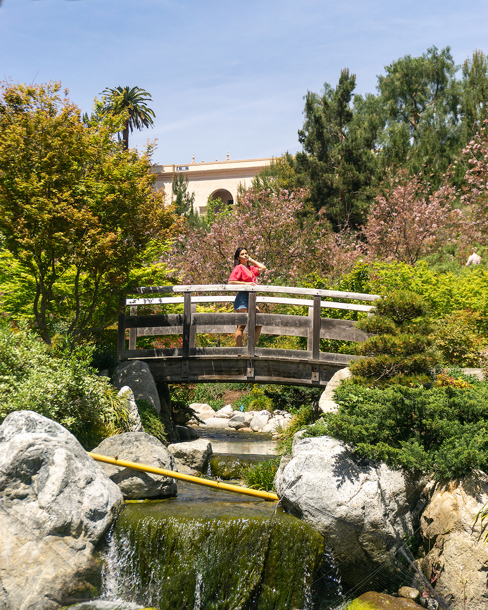 cherry blossoms japanese friendship garden San Diego