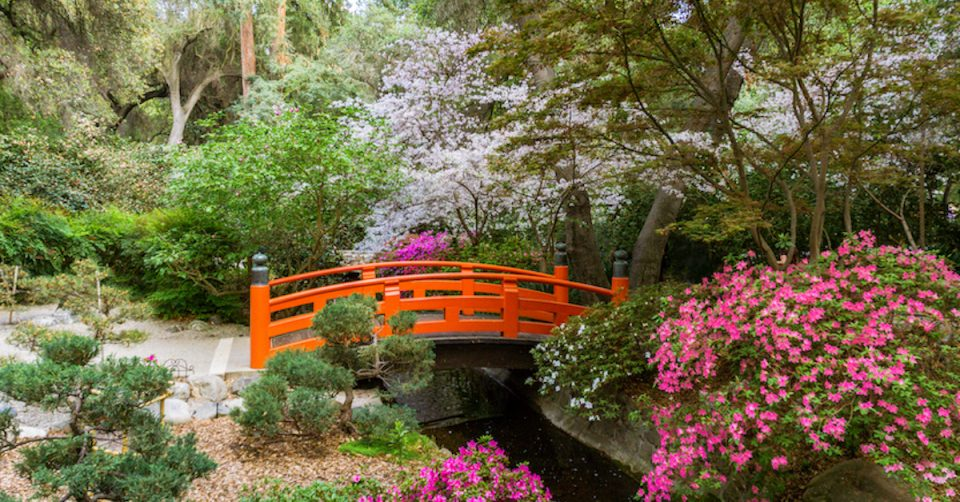 descanso gardens cherry blossoms