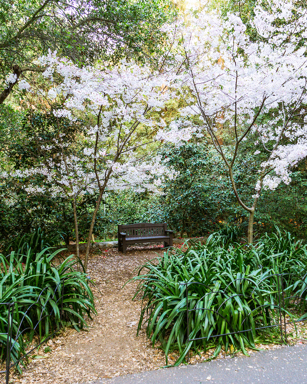 descanso gardens japanese garden los angelesjpg