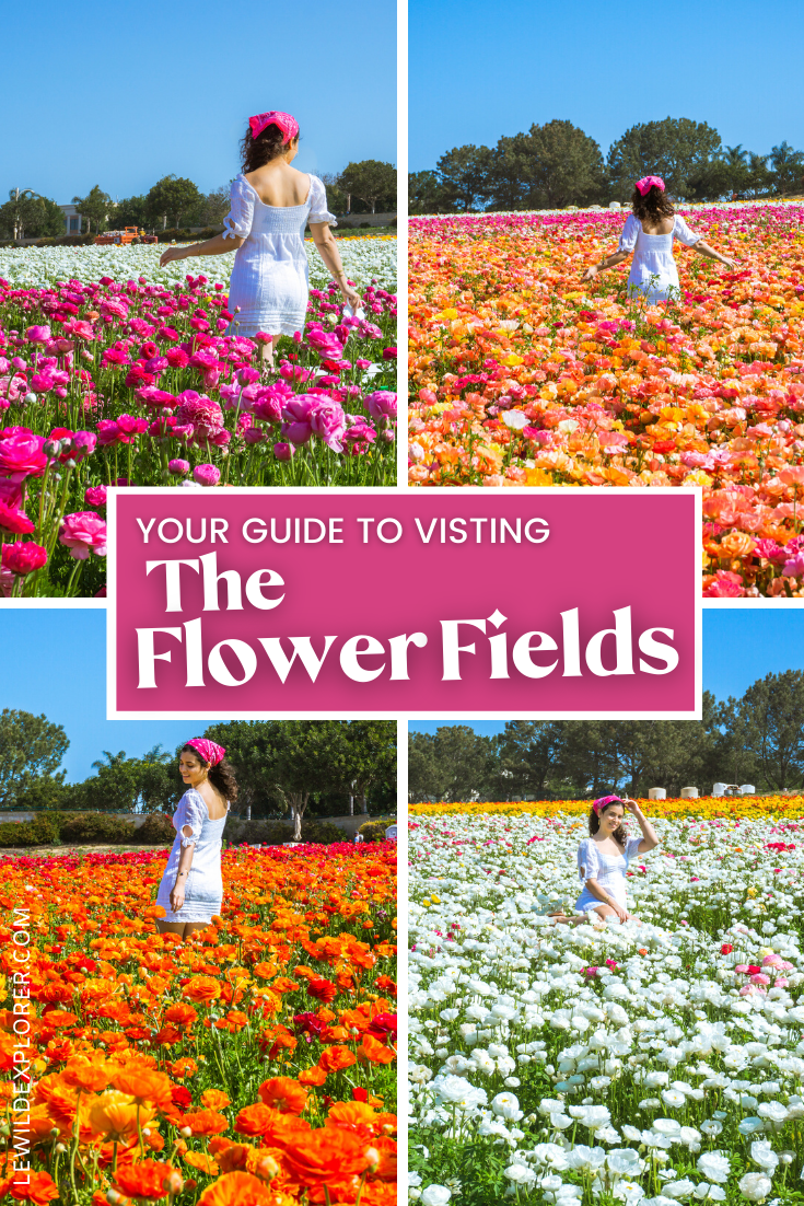 photos of woman in white dress at flower fields in carlsbad