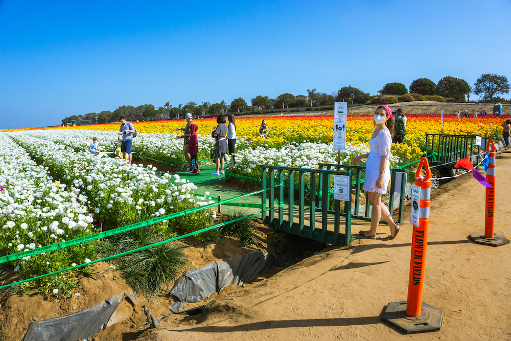 how to take photos at the flower field carlsbad