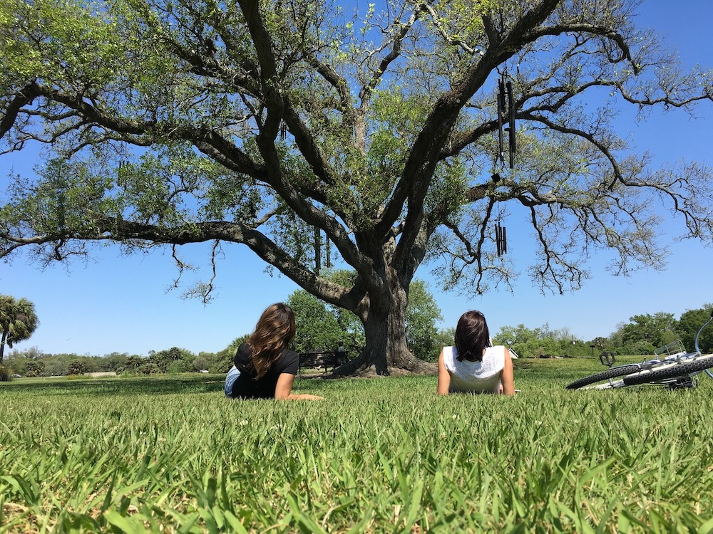 new orleans singing oak tree city park