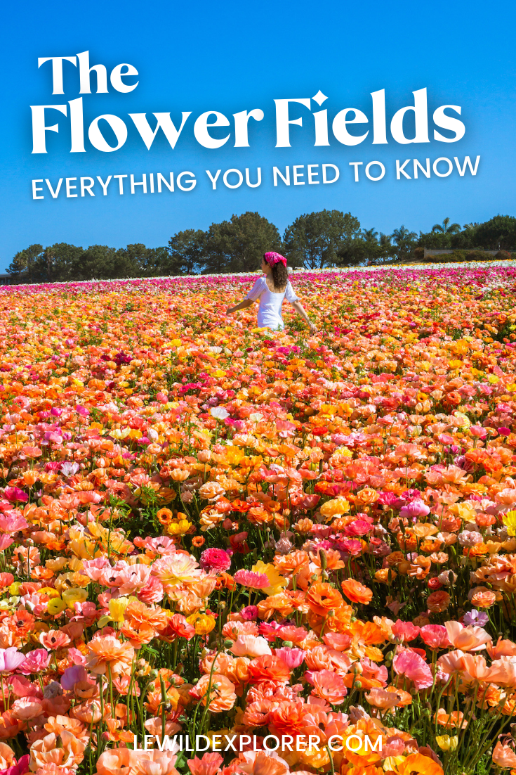 photo of woman in white dress at flower fields in carlsbad