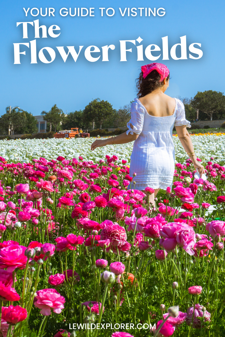 woman in white dress at the flower fields in carlsbad guide