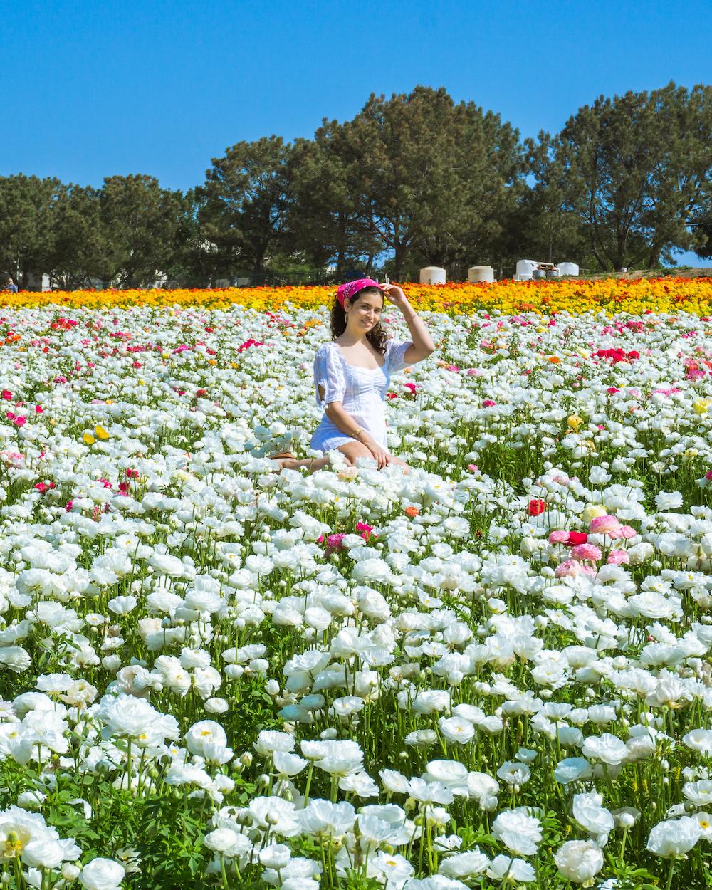woman in dress in white ranunculus flower field in carlsbad