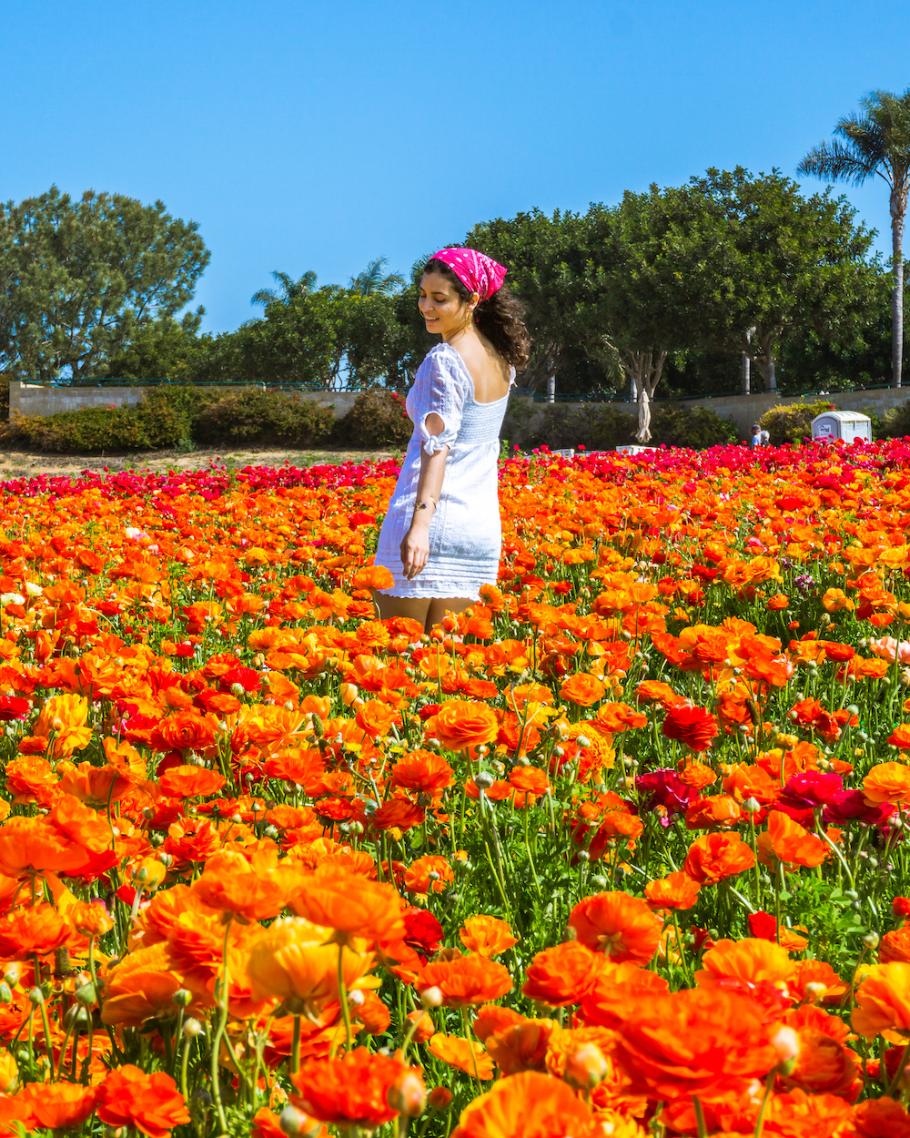 woman in white dress at orange ranunculus flower field in carlsbad