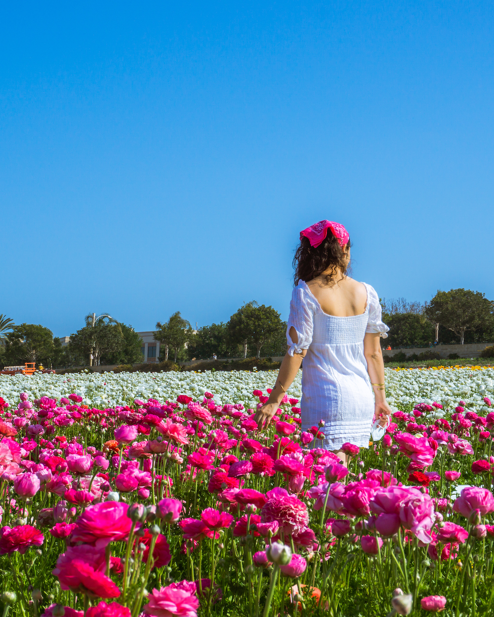 woman in white dress in ranunculus flower field carlsbad
