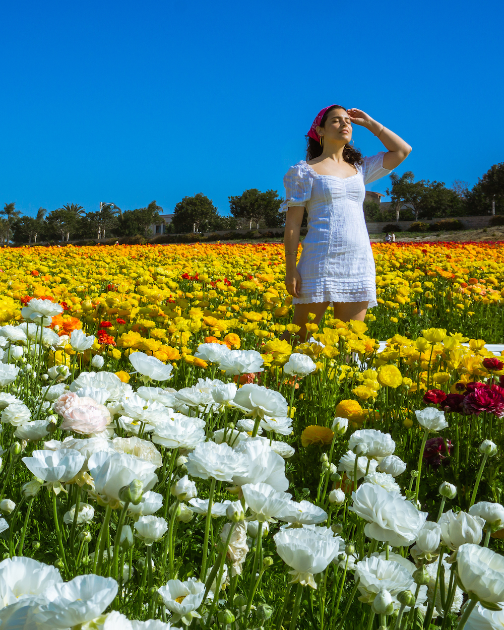 woman in white dress in white and yellow ranunculus flower field carlsbad