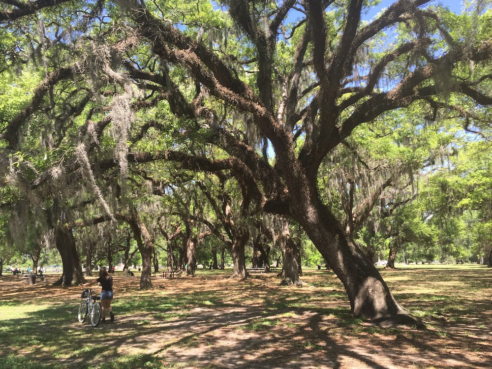 woman walking with bicyle at city park in new orleans with big trees with spanish moss