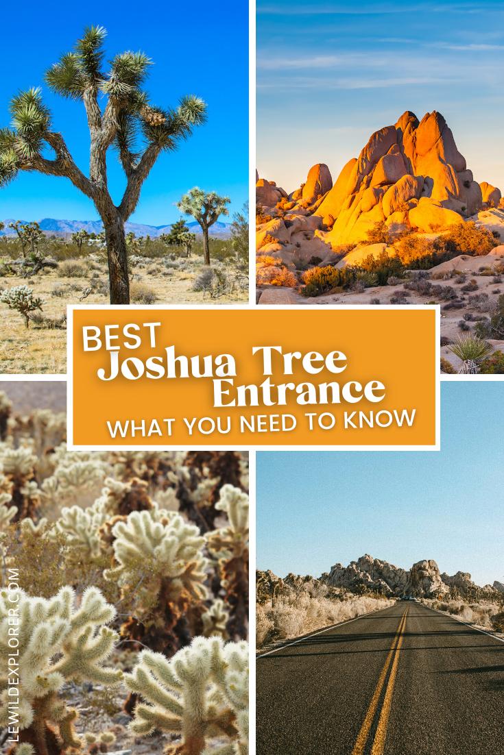 joshua ree and cholla cactus in desert