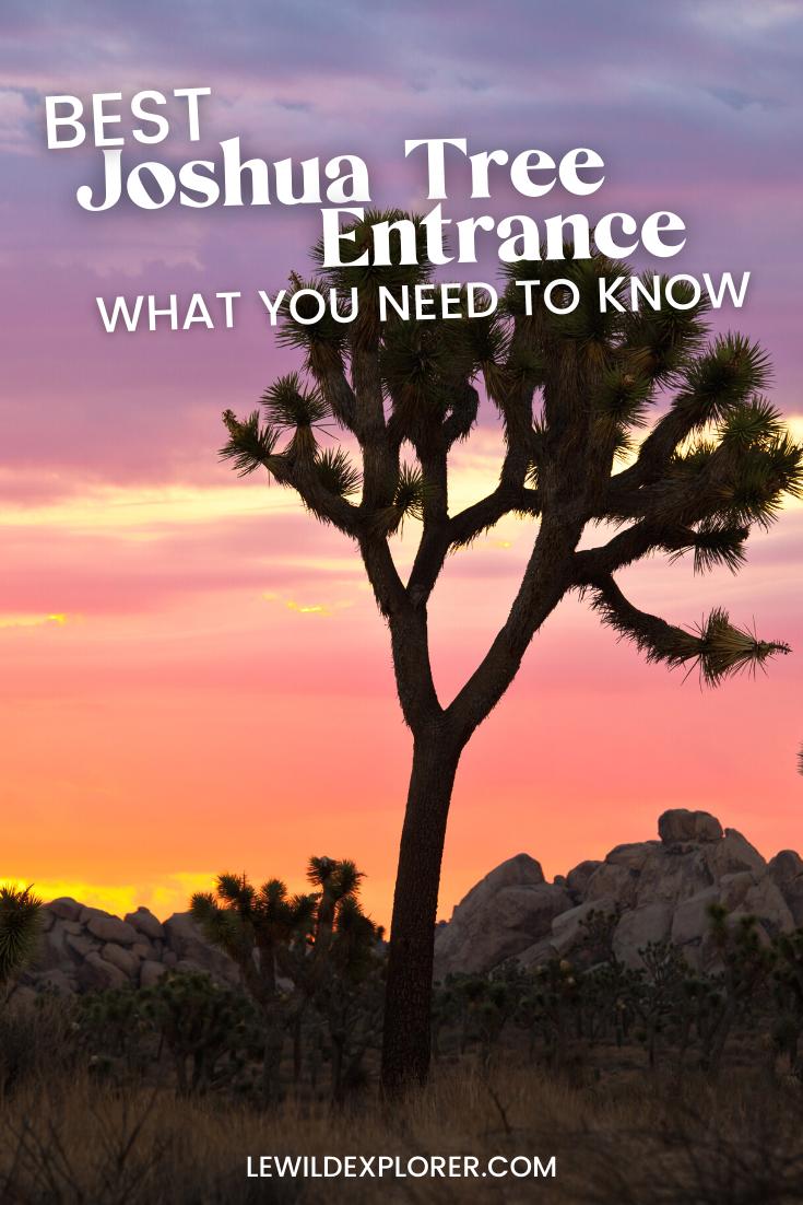 yucca tree at sunset