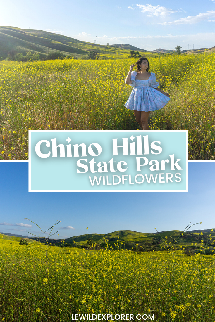 chino hills wildflowers yellow flowers in california